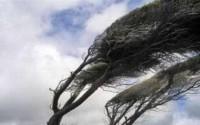 تند باد با سرعت ۷۶ کیلومتر بر ساعت بروجرد را در نوردید